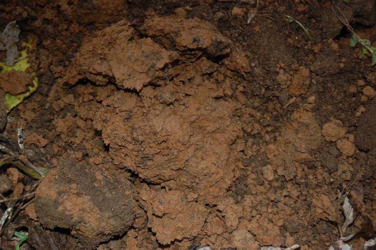 Фундамент на глине 1394