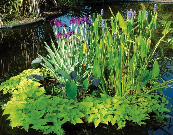 Украшение пруда растениями